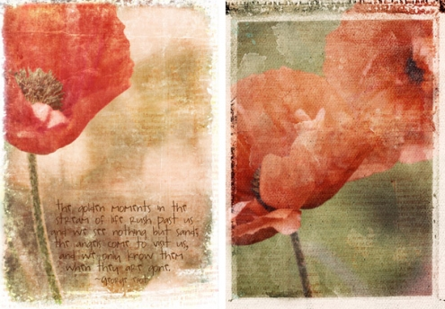 poppies-photoblend12.jpg