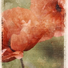 poppies-photoblend1.jpg