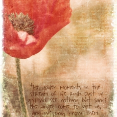 poppies-photoblend2-hardlight.jpg