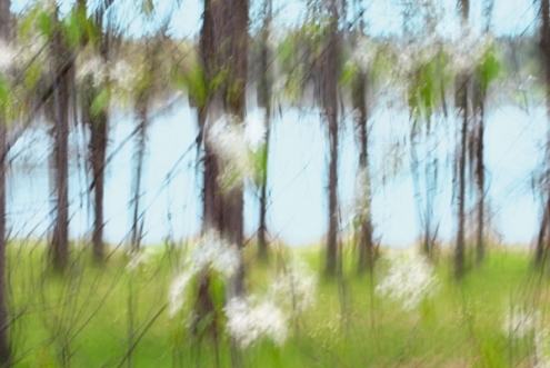 12-abstract-mshefveland.jpg
