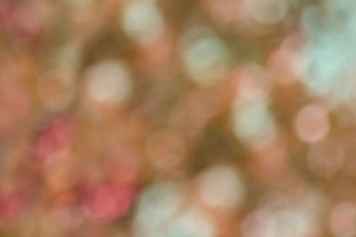 10-photoblend4_cottagearts.jpg
