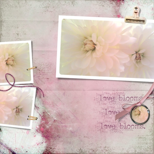 loveblooms-daisiesvalentines2012-plumhaze-lovefresco.jpg