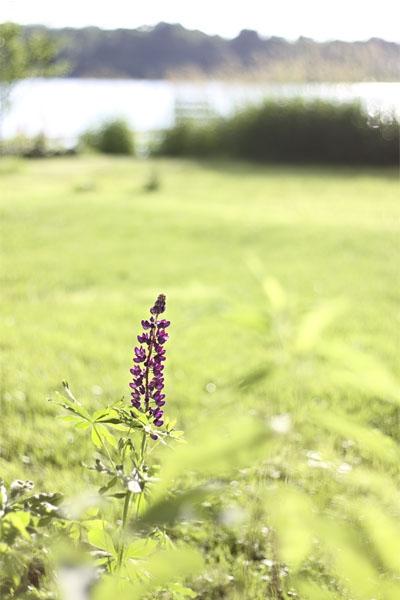 v2011_06_23a012-original.jpg