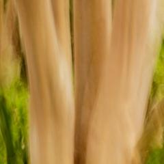 v2011_03_10a205-custom.jpg