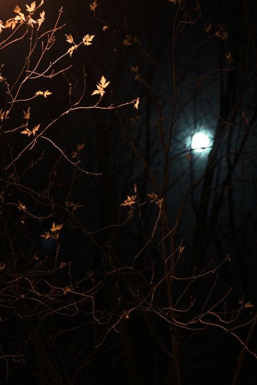 halloween1_blog_cottagearts