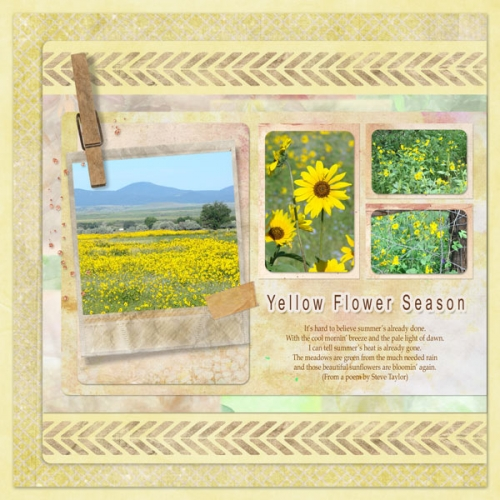 ca_yellowflowerseason
